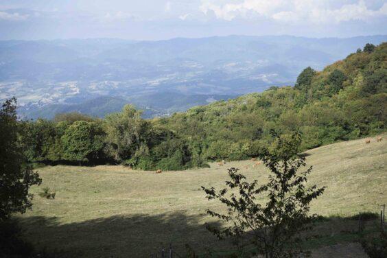 (Scarpinata letteraria a Monte Giovi - foto di Flavia Sistilli)