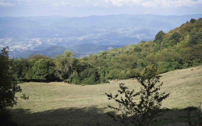 Scarpinata letteraria a Monte Giovi